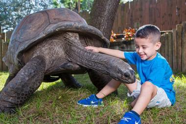Tampa Zoo Aldabra Tortoise